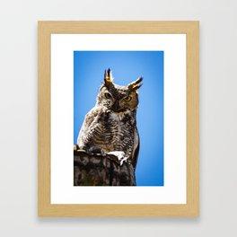 Desert Elf Owl #1 Framed Art Print