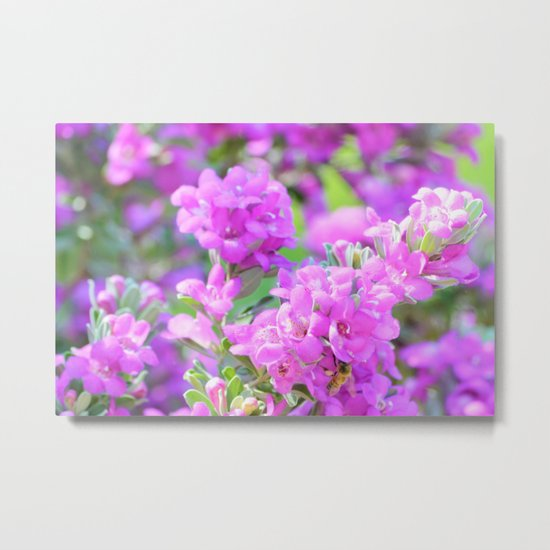 Purple Flowers in the Garden/ Floral/ Summer Sun Metal Print