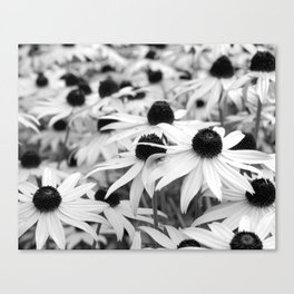 Black and White Susans (Black-Eyed Susan Wildflowers) Canvas Print