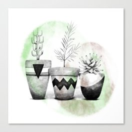 Trio of succulents Canvas Print