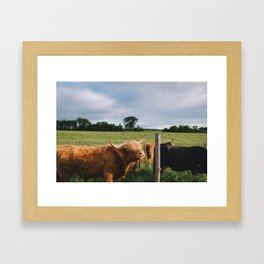 Highland Cows III Framed Art Print