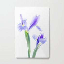 Translucent Iris Metal Print