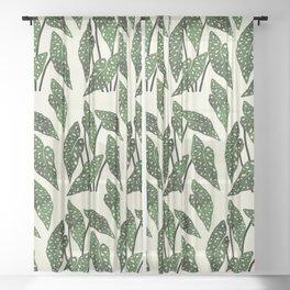 begonia maculata interior plant Sheer Curtain