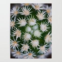 Cactus Close Up Poster