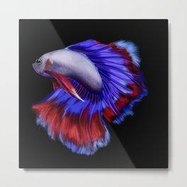 Beautiful betta fish (black version) Metal Print