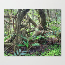 Dancing trees in the cloud forest  -  Tradewinds trail El Yunque rainforest PR Canvas Print