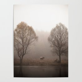 Early morning forest and creek Poster