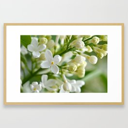 Spring 041 Framed Art Print