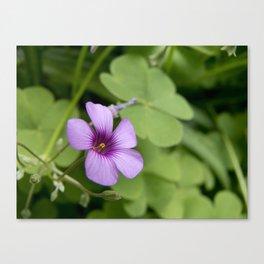 Itty-Bitty-Teeny-Weeny-Purple...Flower Canvas Print