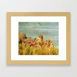 Wild Ducklings Framed Art Print
