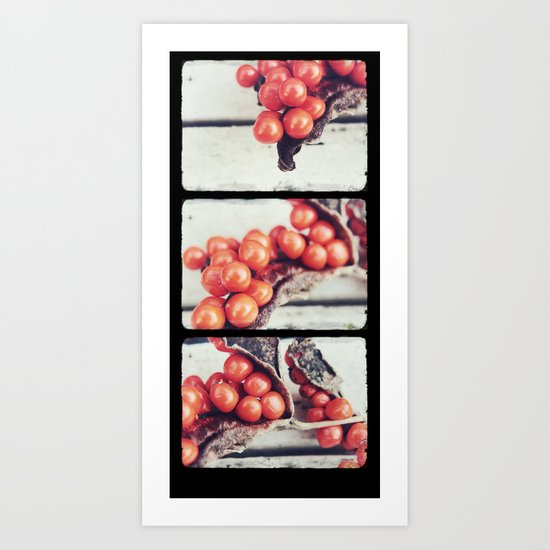 Seed Pods Triptych Art Print