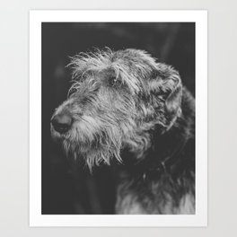 The Irish Wolfhound Art Print