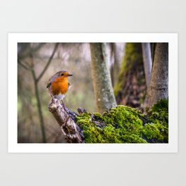 British Robin Perched on a Mossy Tree Branch Art Print