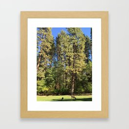 Grazing Deer and Fawn in Yosemite Valley National Park Framed Art Print