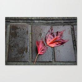 Red Maple Bricks Canvas Print