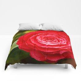 Camellia japonica Comforters