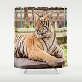 Post Playtime Rest, Indo-china Tiger Shower Curtain