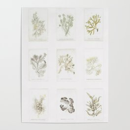 Naturalist Mosses Poster
