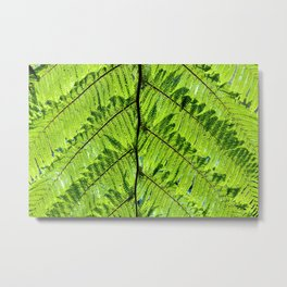 Soft tree fern 308 Metal Print