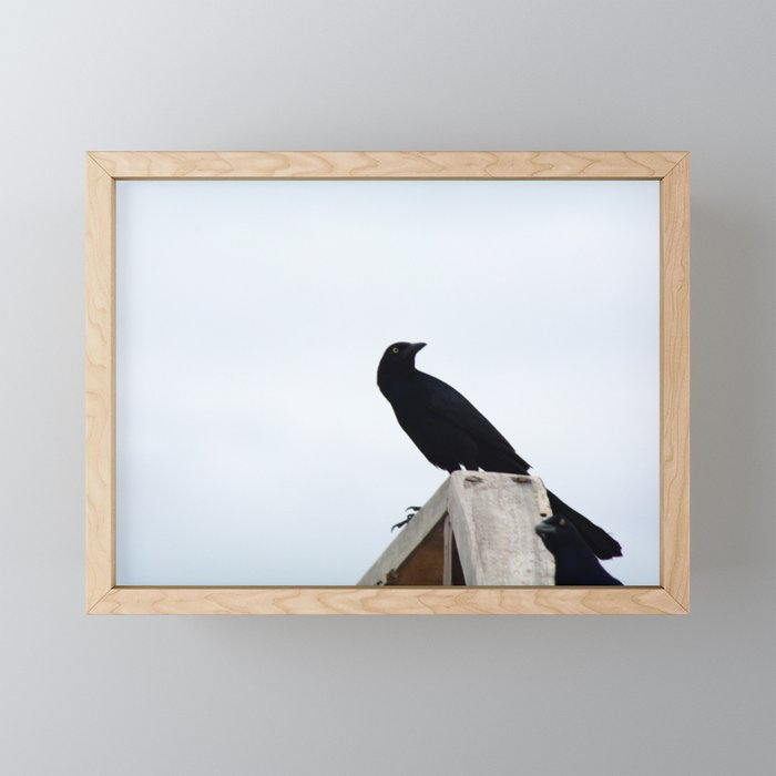 Bird collection _03 Framed Mini Art Print