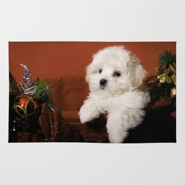 Fluffy Maltese Puppy Relaxing in a Gold Basket with Christmas Decorations Rug