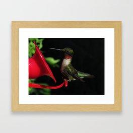 Male ruby-throated hummingbird 35 Framed Art Print
