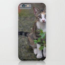 Little Liza the cat iPhone Case