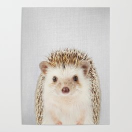 Hedgehog - Colorful Poster