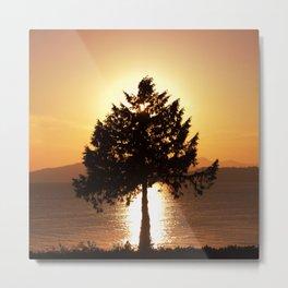 Summer Sunset Tree  Metal Print