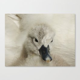 Surrounded by love Canvas Print