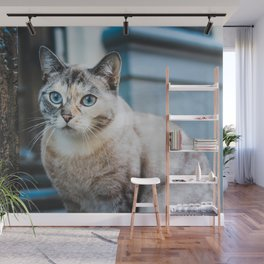 Cat by Erik-Jan Leusink Wall Mural