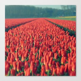 Tulips field #8 Canvas Print