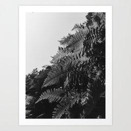 Colorless Ferns Art Print