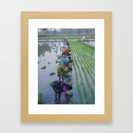 Colour In The Paddy Framed Art Print