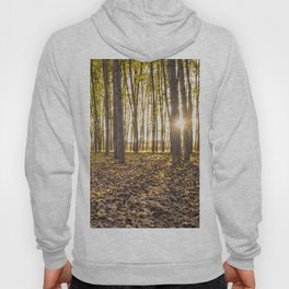 Sunbeams between tree trunks in a forest in autumn Hoody