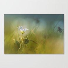 Cerastium fontanum subsp. vulgare  Canvas Print