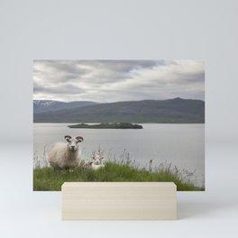 Icelandic sheeps #1 Mini Art Print