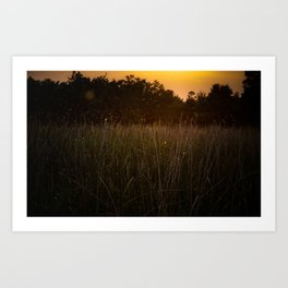 Sunset in the Fields Art Print