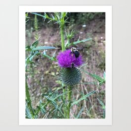 Beenand Thistle Art Print