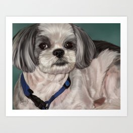 Shih Tzu Painting Art Print