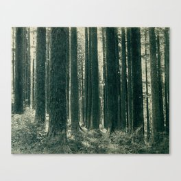Mystery Forest of The Past Canvas Print