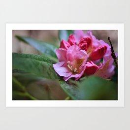 Pretty in Pink3 Art Print