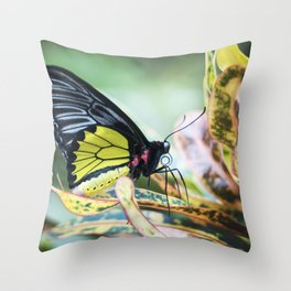 Black and Yellow Butterfly Throw Pillow