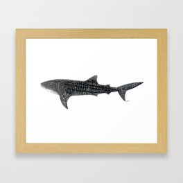 Whale shark Rhincodon typus Framed Art Print