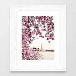 Washington Monument Amid Cherry Blossoms Framed Art Print