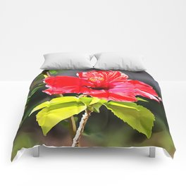 Beautiful Red Tropical Hibiscus Flower Comforters