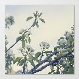 Blossom vintage Canvas Print