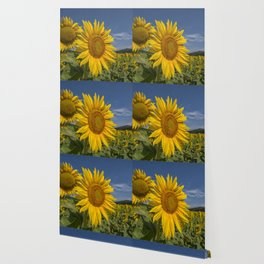 SUNFLOWERS 1 Wallpaper
