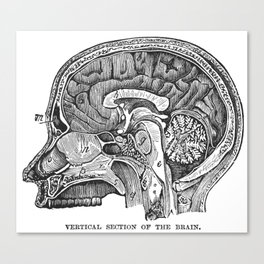 Cottage Physician - Vertical section of the brain Canvas Print