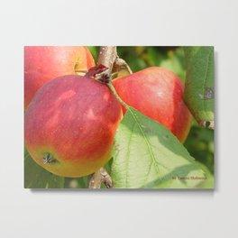 Autumn Apples Metal Print